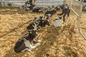 Inek çiftliği — Stok fotoğraf