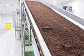 Raisins in raisin production factory packaging — Stock Photo