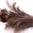End feather duster — Stock Photo