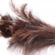 End feather duster — Stock Photo #27034575