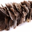 Brown feather duster — Stock Photo #27034599