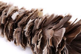 Broom to sweep dust feather isolated — Stock Photo