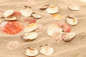 Lot of shells is located on sandy background — Stock Photo