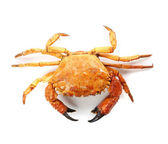 Seafood red crab isolated on a white background — Stock Photo