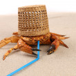 Basket, crab on sand and tubule for cocktail — Stock Photo #27931707