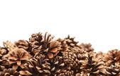 The Pine cones — Stock Photo