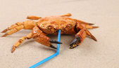 Red crab on sand and tubule for a cocktail — ストック写真
