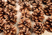 Background of pine cones arranged on the sand — Stock Photo