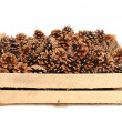 Stock Photo: Pine cones in wooden box