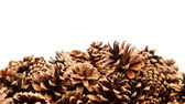 Pine cones are located bottom background. — Stock Photo