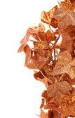 Ram av gyllene murgröna blad. — Stockfoto