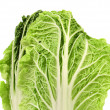 Chinese cabbage on white background — Stock Photo