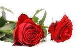 Twob czerwone róże. — Zdjęcie stockowe