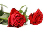 Twob rote rosen. — Stockfoto
