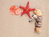 Sea star and shells on the sand — Stock Photo
