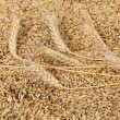 Stock Photo: Blend of different grains. Close up.