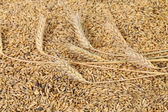 Blend of different grains. Close up. — Stock Photo