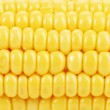 Background of indian corn. Close up. — Stock Photo