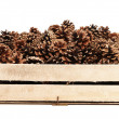 Stock Photo: Pine cones in wooden box.
