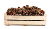 Pine cones in the wooden box. — Stock Photo