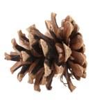 Brown pine cone. — Stock Photo