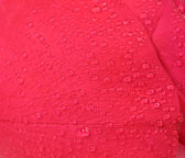 Close up of water drops on a rose petal. — Stock Photo