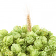 Closeup of hop and wheat ear. — Stock Photo #33029667