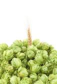 Closeup of hop and wheat ear. — Stock Photo