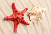 Starfish and seashell on sand. — ストック写真