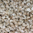 Lot of shells different sizes — Stock Photo
