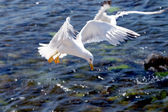 Seagull on a background of the sea — Stock fotografie