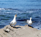Two white seagulls on rocks. — Stock fotografie