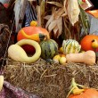 Multi colored fresh pumpkin harvest. — Stock Photo