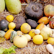 Stock Photo: Multi colored fresh pumpkin harvest.