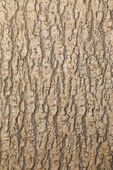 Close up texture of brown tree. — Stock Photo
