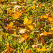 Landscape of colorful fall leaves on forest floor — Stock Photo #34945751