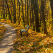 Old walkway in autumn park — Stock Photo