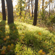 Landscape of autumn forest with sunlight — Foto de Stock