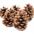Bunch of pine cones. — Stock Photo