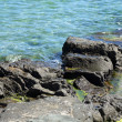 Blue sea coast and shiny wet stones. — Stock Photo