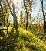 Sunny day in park. — Stock Photo