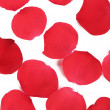 Red rose petals. — Stock Photo