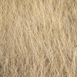 Close up of dry grass. — Stock Photo