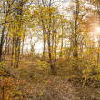 Close up of autumn forest. — Stock Photo #35354311