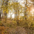 Close up of autumn forest. — Stock Photo