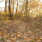 Autumn forest trees. — Stock Photo