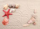 Palm on sand shells and sea start. — Stock Photo
