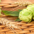 Closeup of hop and wheat — Stock Photo #35715045