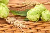 Closeup of hop and wheat — Stock Photo