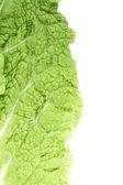 закройте лист капусты chenese. — Стоковое фото